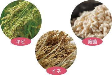 キビ・イネ・麹菌